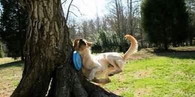 fail-dog1